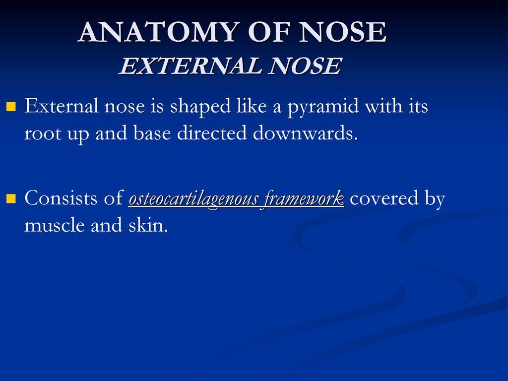 Nose anatomy ppt