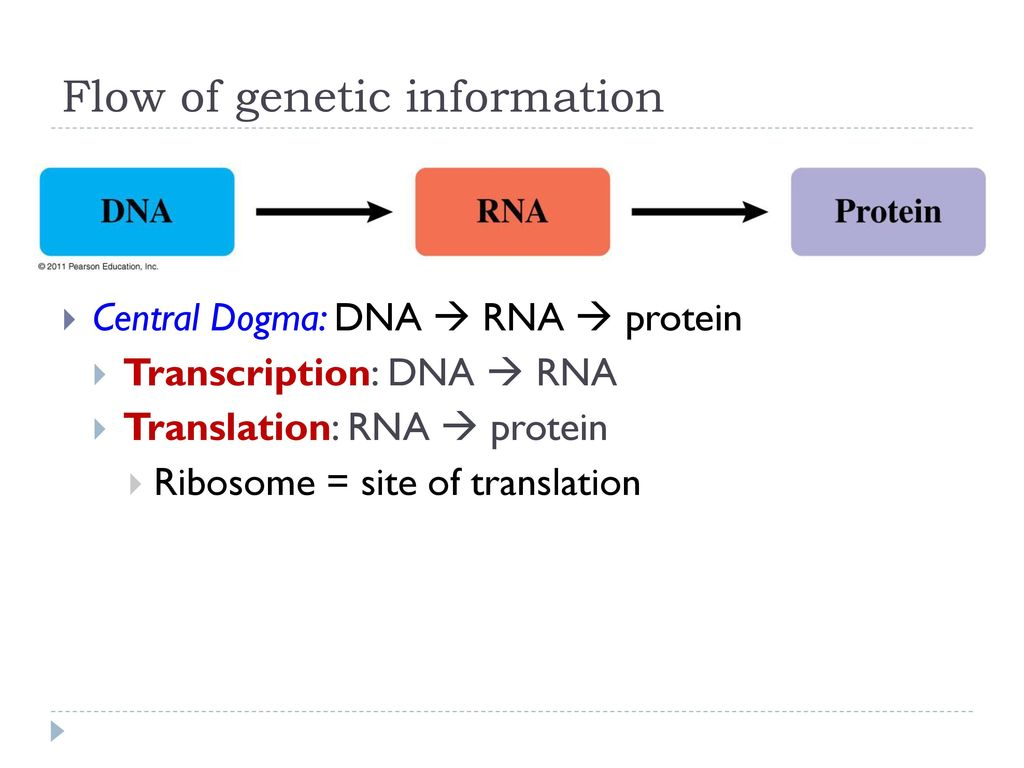 Where is genetic information located?