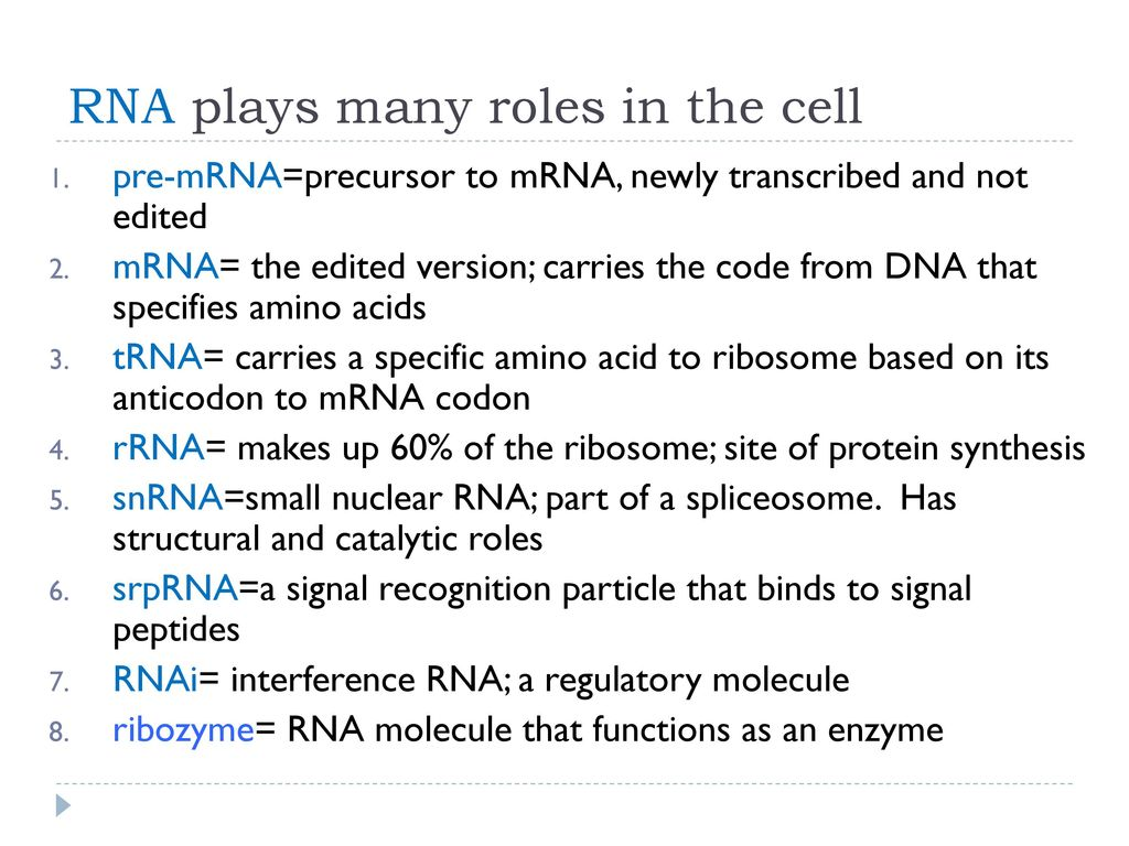 What Role Does RNA Play in Cell Life?