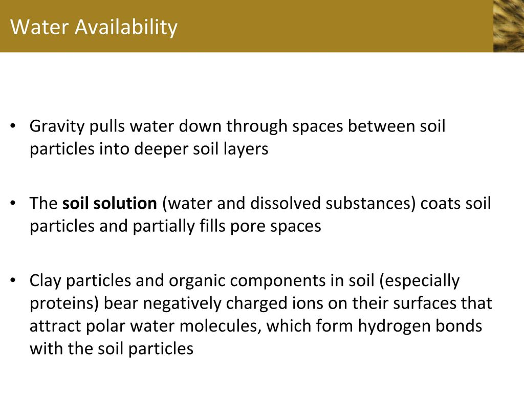 Chapter 35 plant nutrition ppt video online download for Why the soil forms layers in water