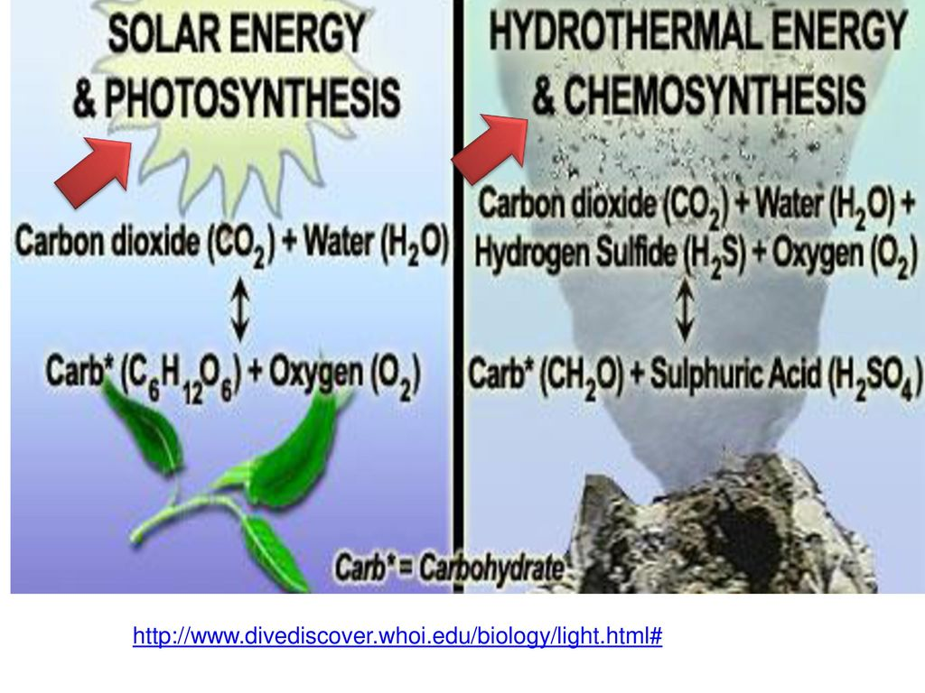 chemosynthesis diagram A venn diagram showing photosynthesis vs cellular respiration you can edit this venn diagram using creately diagramming tool and include in your report/presentation/website.