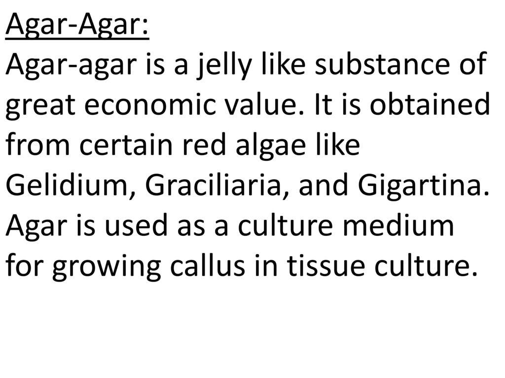 economic importance of algae pdf