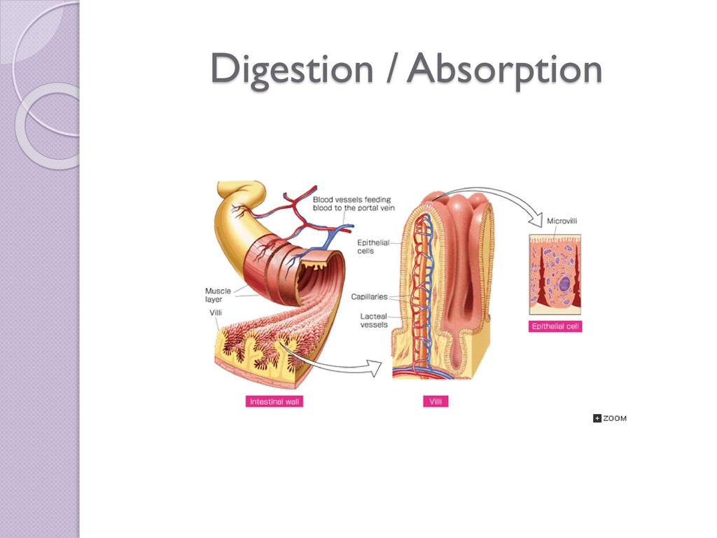 Digestion Absorption Ppt Video Online Download