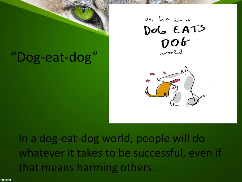 Idioms With Animals Explaining Situation Ppt Download