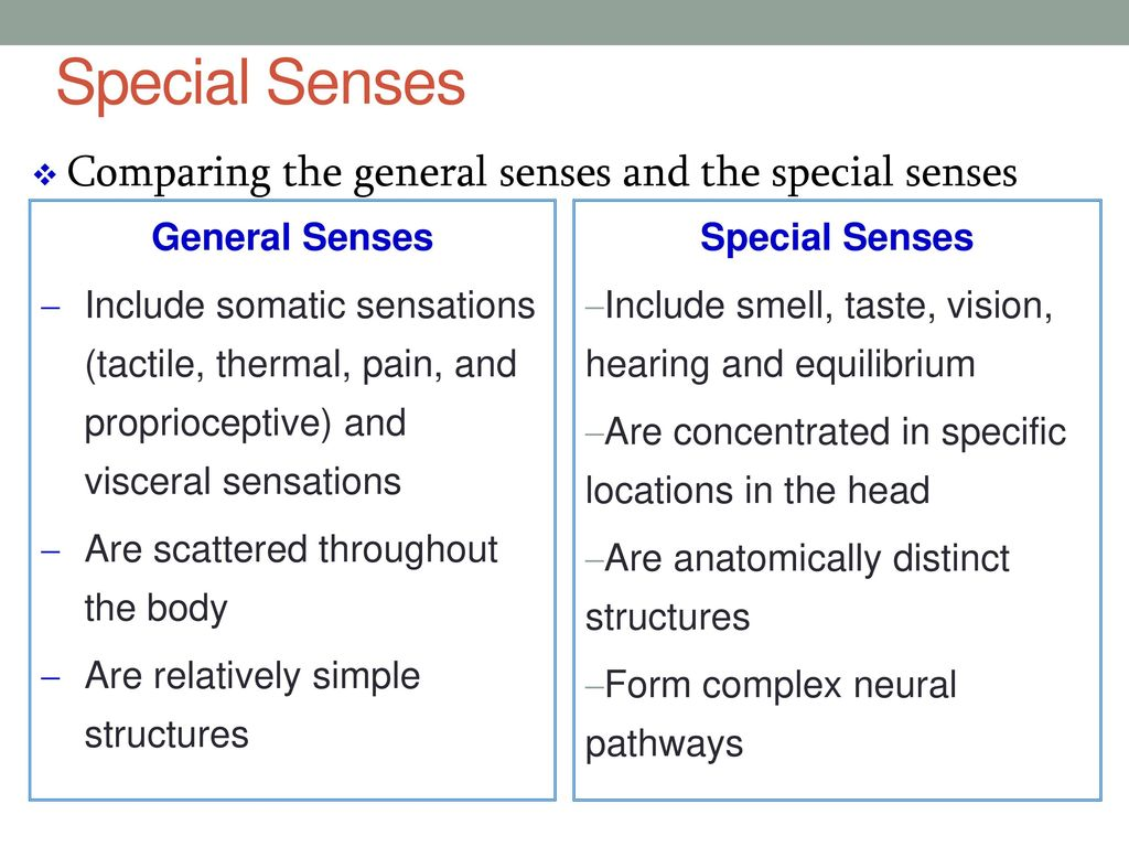 Fancy Anatomy And Physiology Senses Elaboration - Physiology Of ...