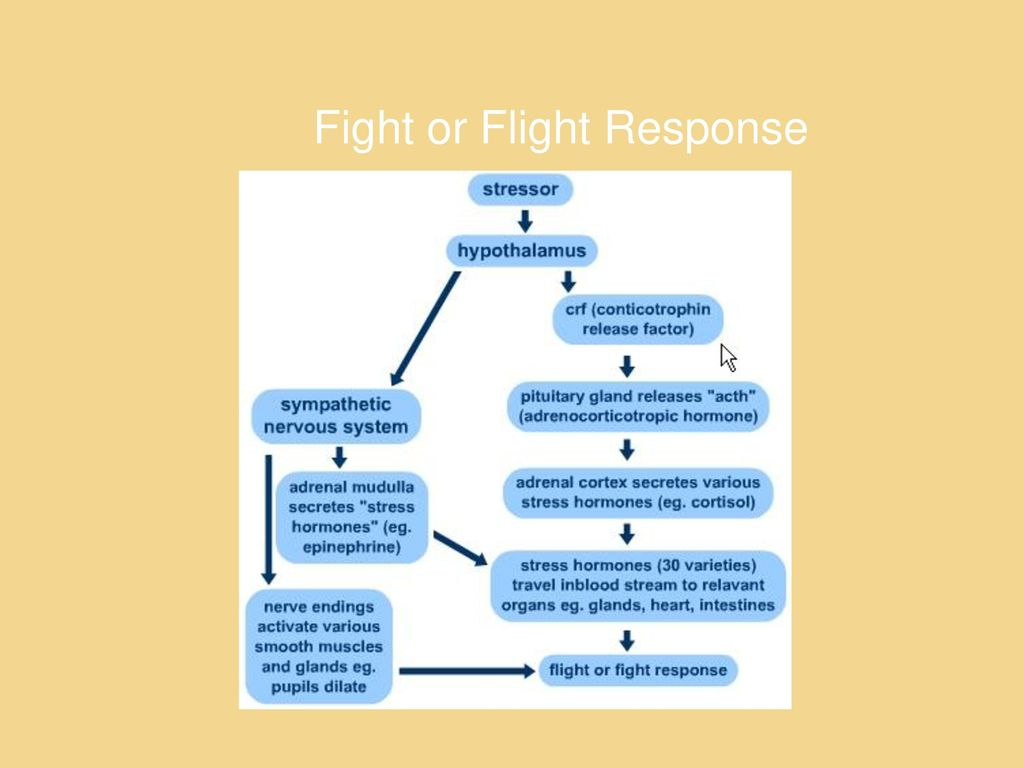 how to stop the fight or flight response