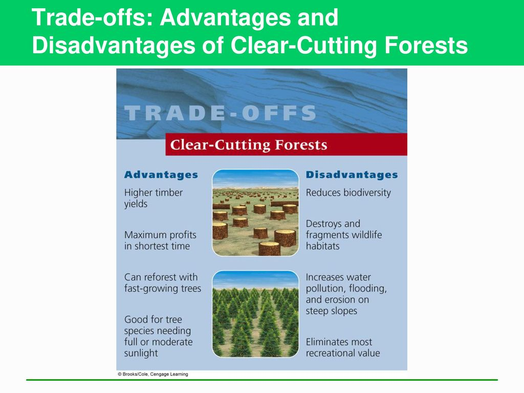 advantages and disadvantages of forest Dealing with pre apps advantages and disadvantages  into the planning  framework in wyre forest, in a way which avoids abortive costs.