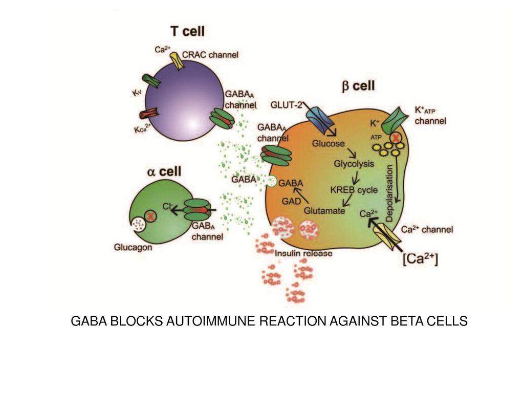 Gamma Aminobutyric Acid Gaba Treatment Blocks