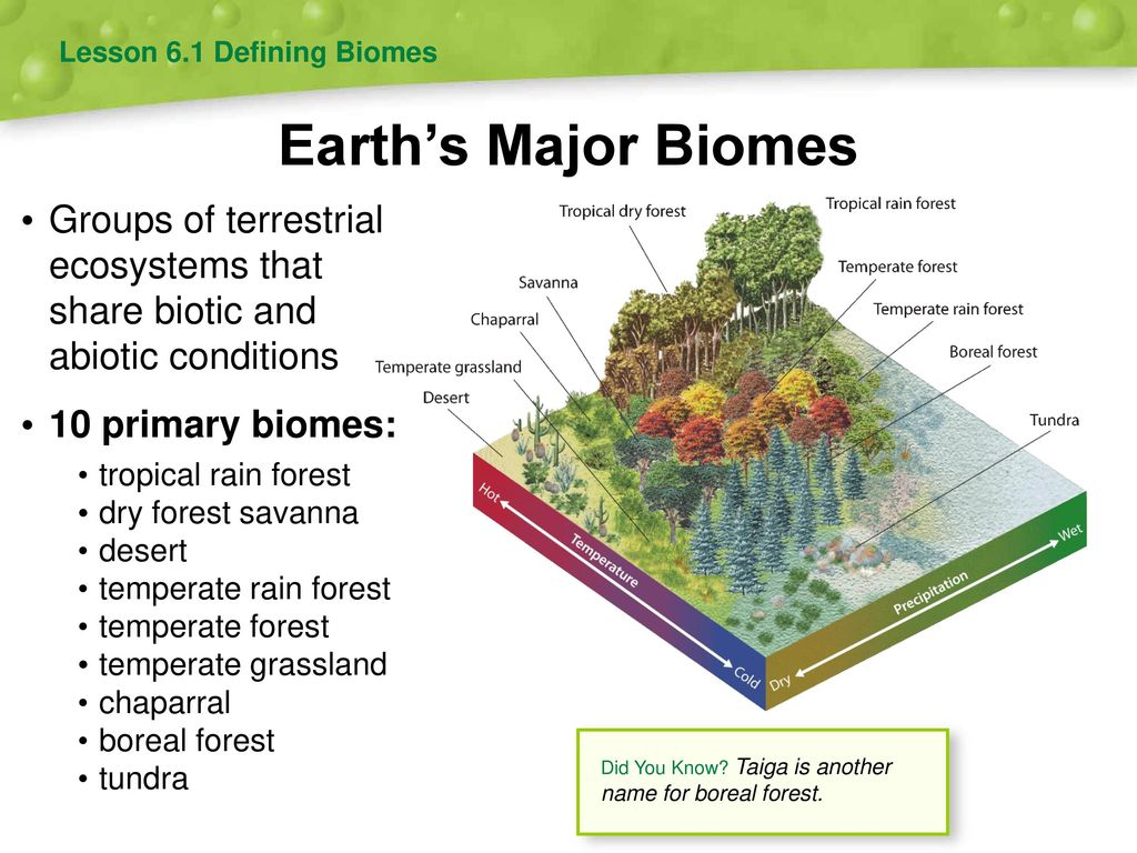 a report of taiga the largest land biome on earth The taiga biome is the second largest biome on earth it spans across multiple continents including north america, europe, and asia the taiga biome is also known as the coniferous forest biome or boreal forest biome.