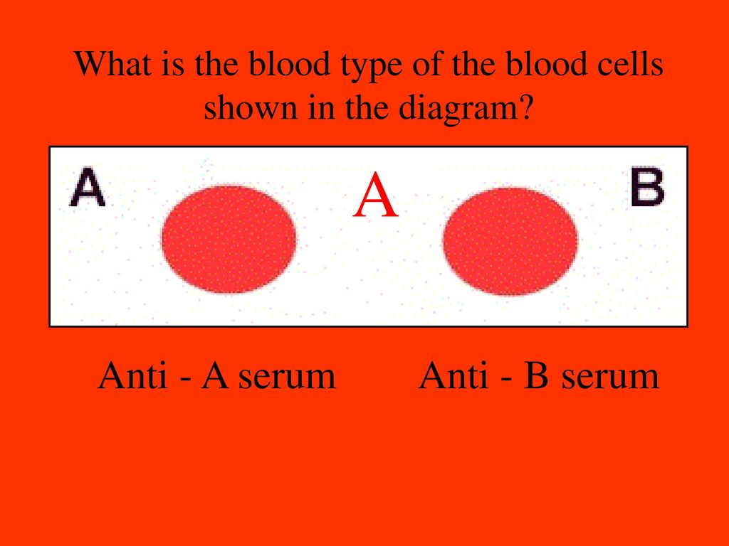 If youre in an accident and need blood how do you know which what is the blood type of the blood cells shown in the diagram pooptronica