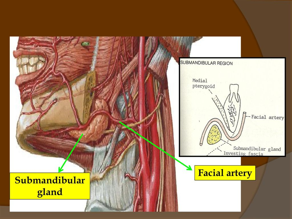 BLOOD AND NERVE SUPPLY TO HEAD & NECK - ppt video online ...