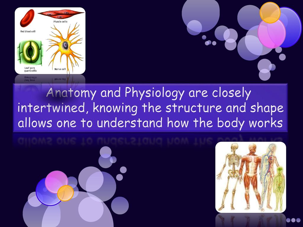The Human Body An Orientation Ppt Download