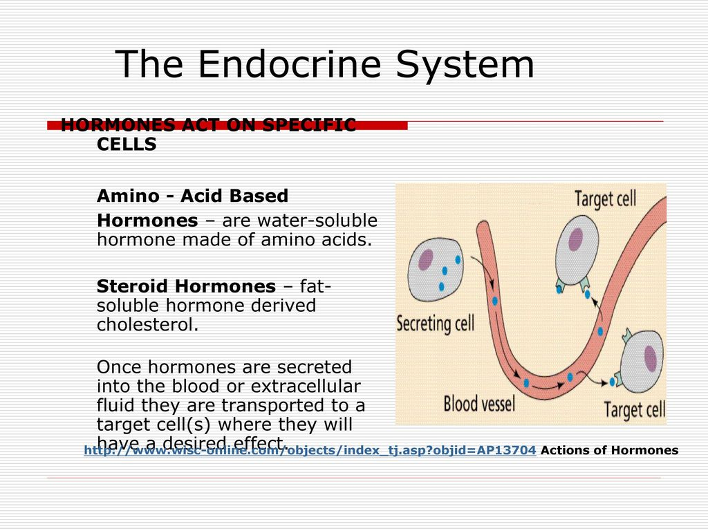 endocrine system and specific target cells Human endocrine system hormone - a hormone is a chemical secreted by an endocrine gland and carried in the bloodstream to target organs where it performs a specific function.