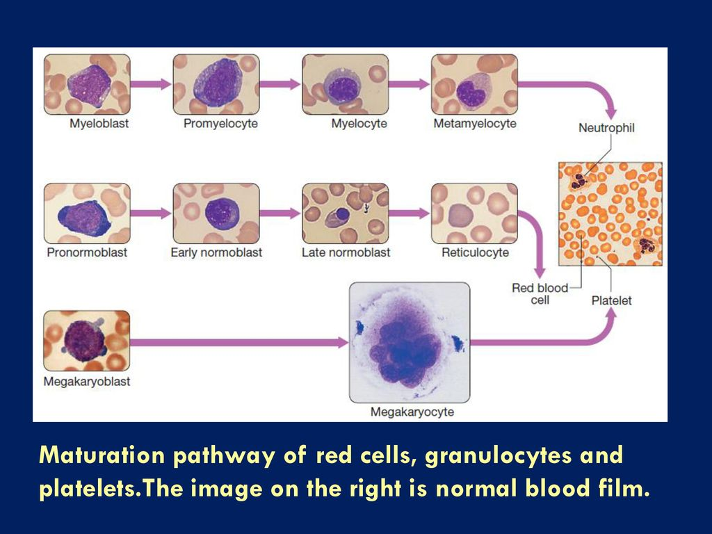 pathway of red blood cells Conundrum in h2s homeostasis is its fate in red blood cells (rbcs), which  the  bacterially derived sulfide oxidation pathway that resides in.