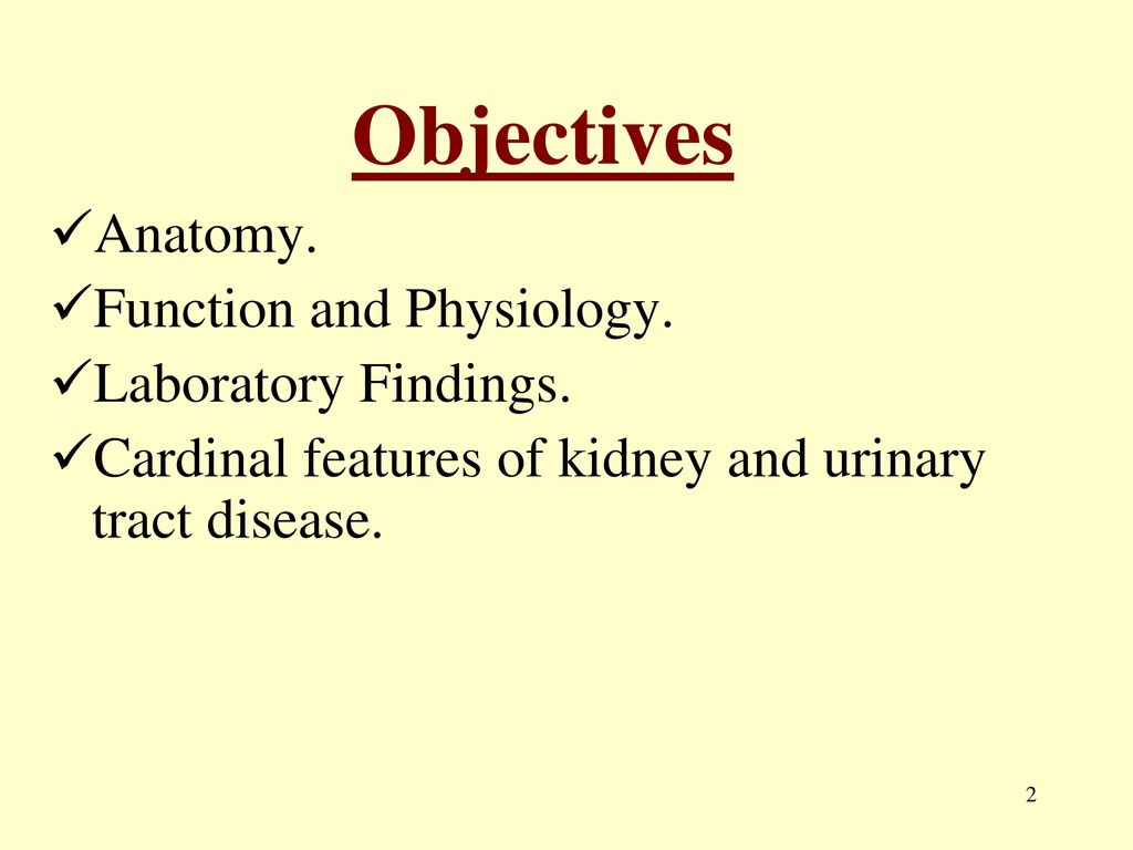 Renal System. - ppt download