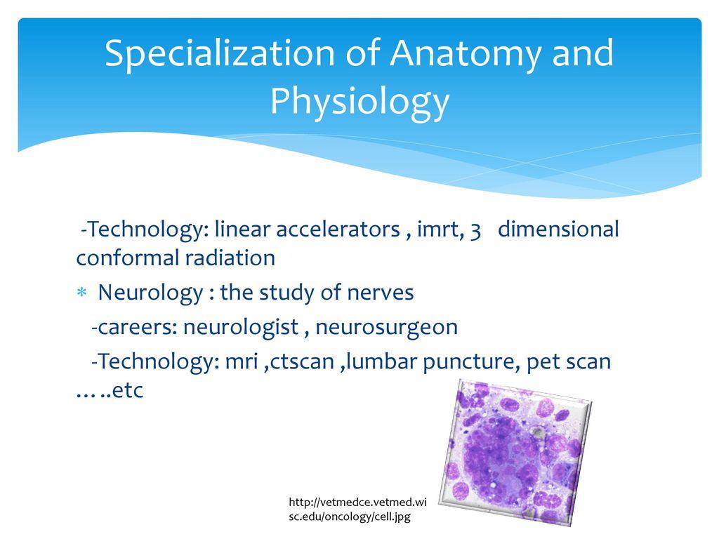 Nett Anatomy And Physiology Careers Zeitgenössisch - Menschliche ...
