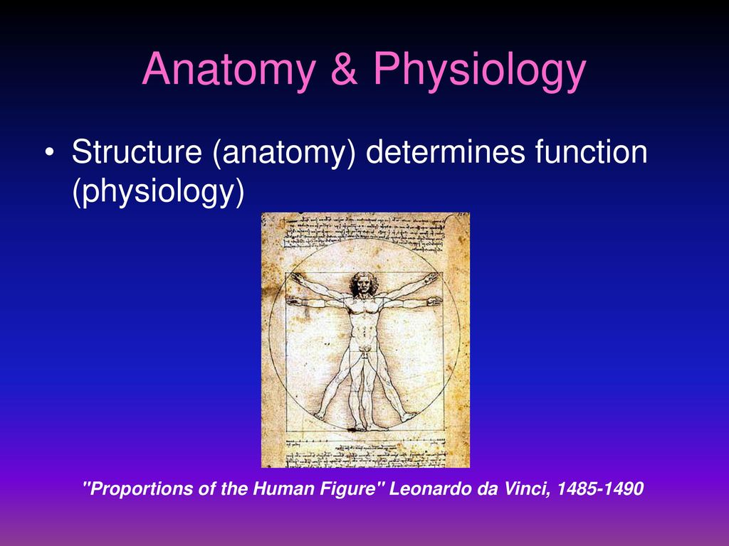 Human Body Terminology - ppt download