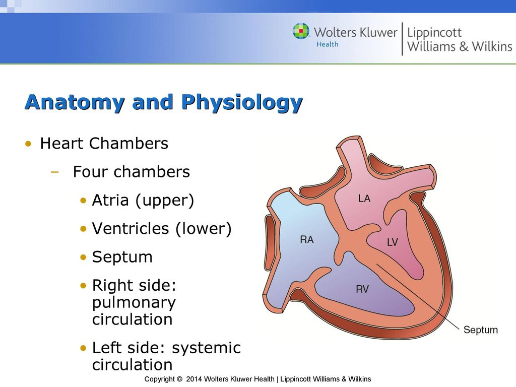 Excelente Lippincott Anatomy And Physiology Ornamento - Imágenes de ...