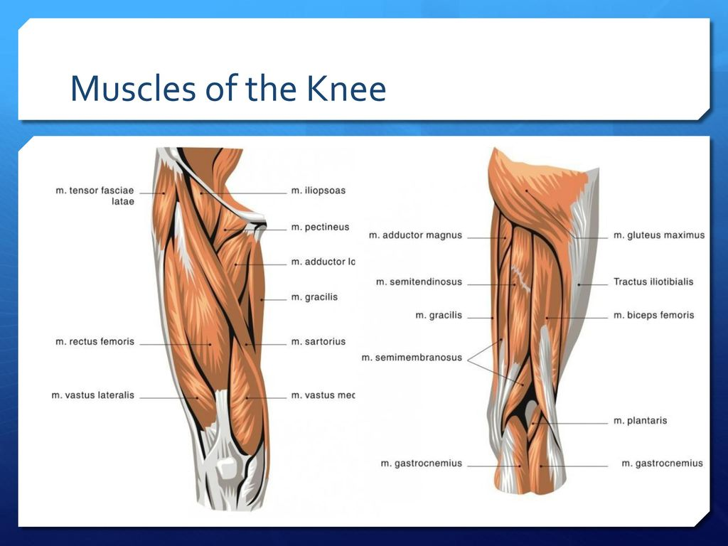 Basic Athletic Training Chapter 7 Knee and Thigh Edited by Gurchiek ...