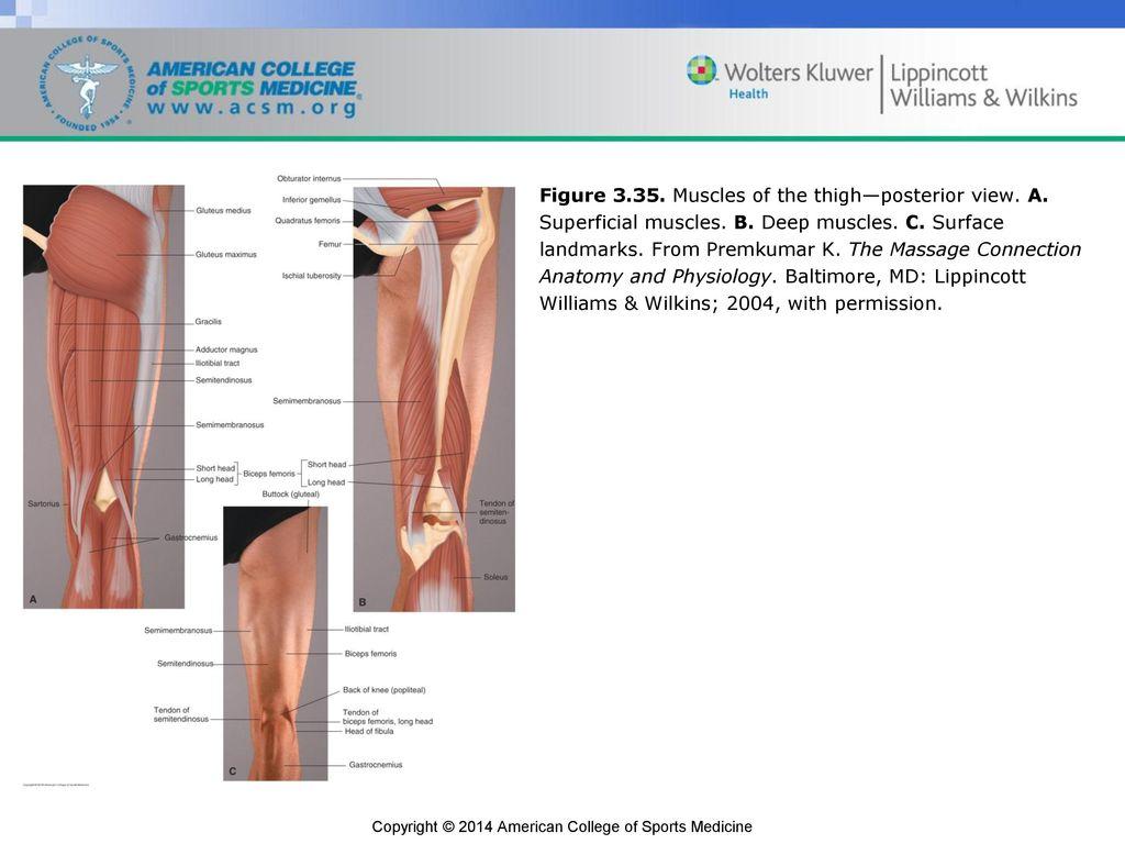 Groß Lippincott Anatomy And Physiology Bilder - Anatomie Von ...