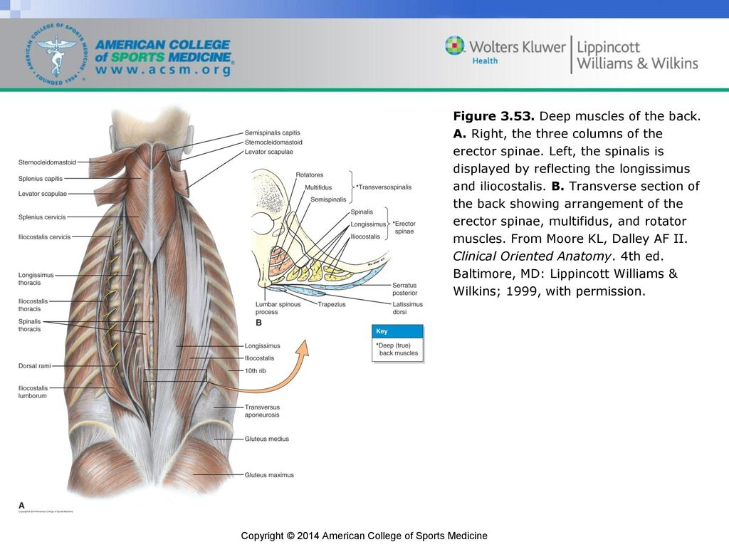 Fancy Clinical Anatomy Moore Inspiration - Physiology Of Human Body ...