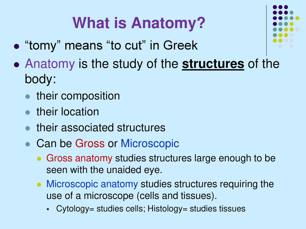 Anatomy Means What Image collections - human body anatomy