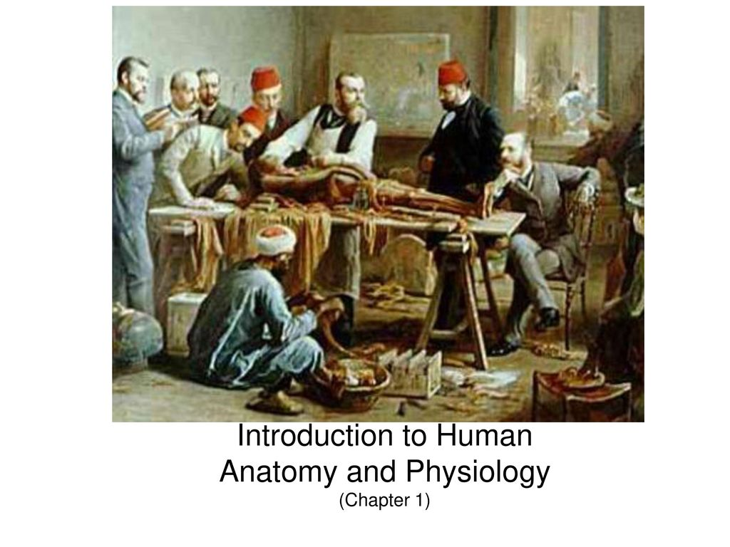 Introduction to Human Anatomy and Physiology (Chapter 1) - ppt download