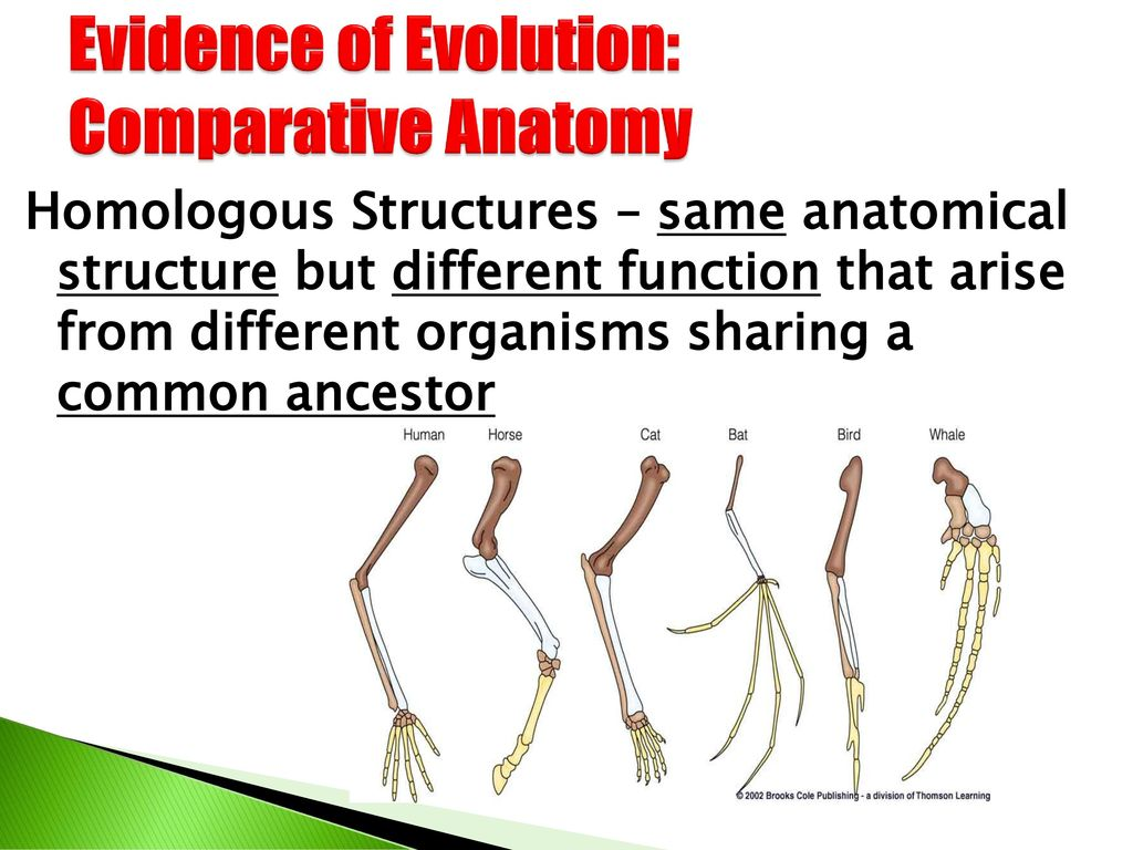 Attractive Comparative Anatomy And Evolution Component - Physiology ...