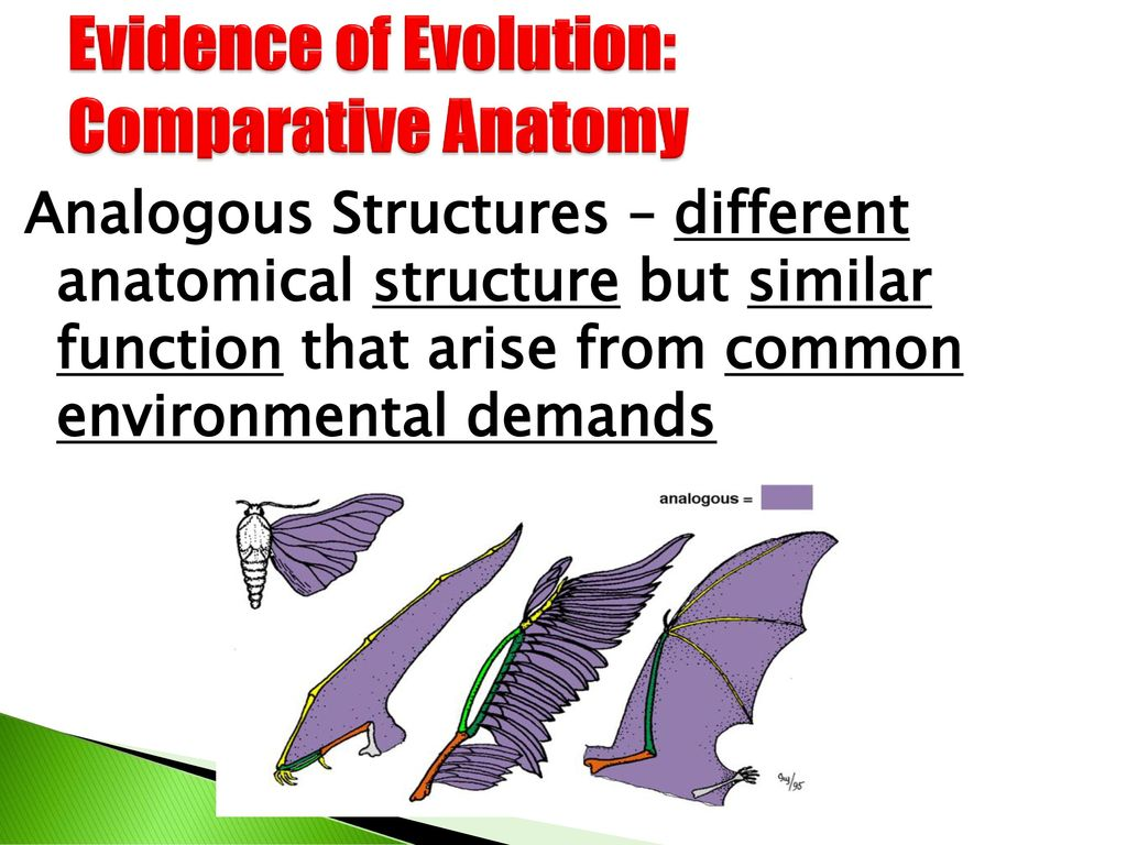 Excelente Evidence Of Evolution Comparative Anatomy Componente ...