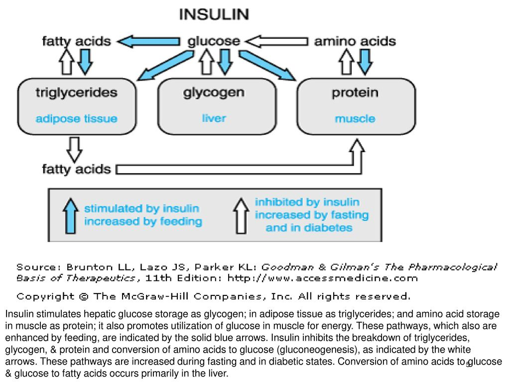 Diabetes mellitus pathophysiology 2 phcl 415 dr dina a a 5 insulin stimulates pooptronica