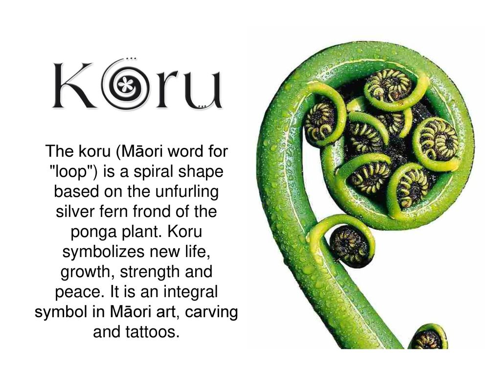 The koru mori word for loop is a spiral shape based on the the koru mori word for loop is a spiral shape based on the unfurling buycottarizona