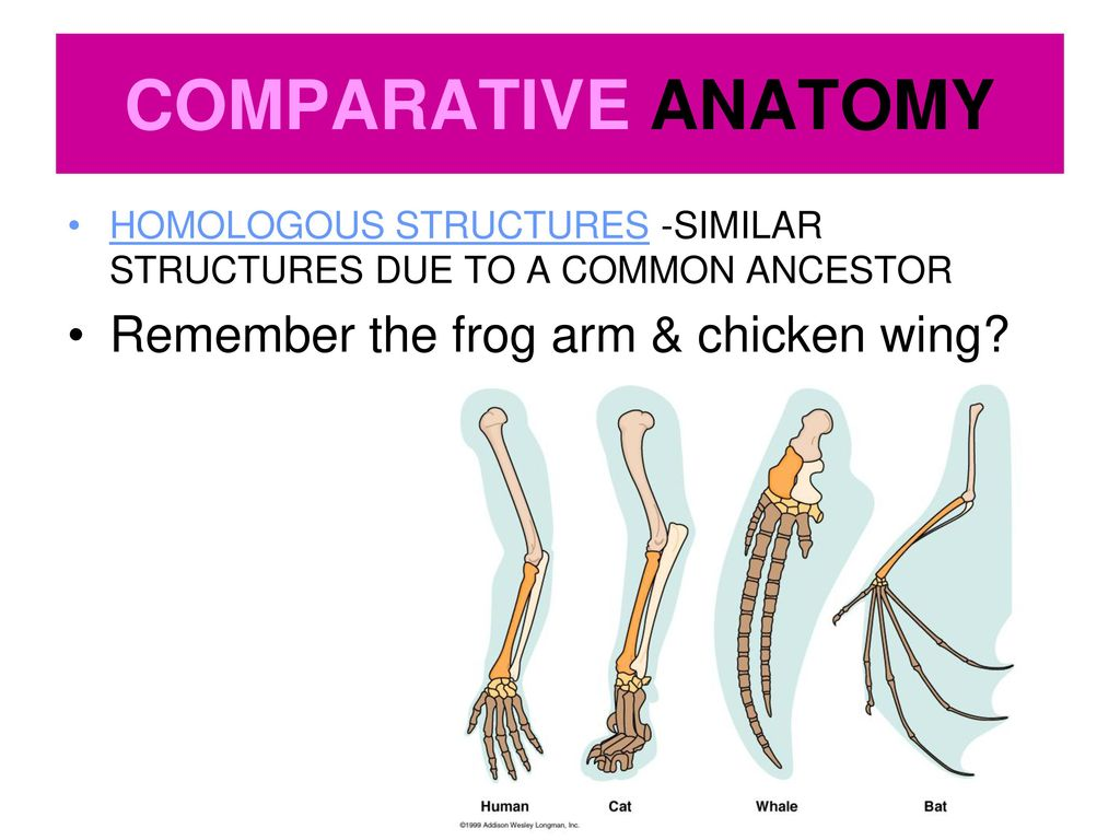 Dorable Comparative Anatomy Ppt Gallery Physiology Of Human Body