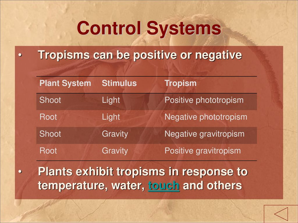 worksheet Phototropism Worksheet science 10 c1 0 imaging the cell living systems ppt download 33 control