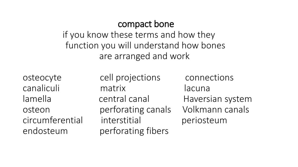 Chapter 7 Anatomy Of Bone Tissue And More Ppt Download