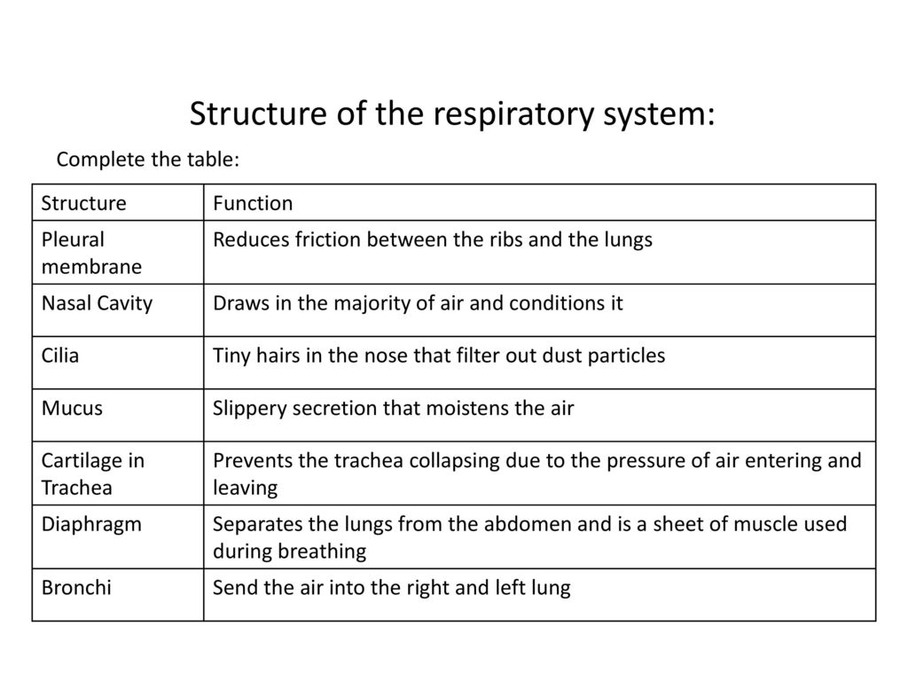 Addition Function In Javascript Phpsourcecode Respiratory