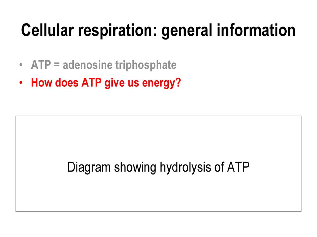 Cellular respiration ppt download 3 cellular respiration general information pooptronica Image collections