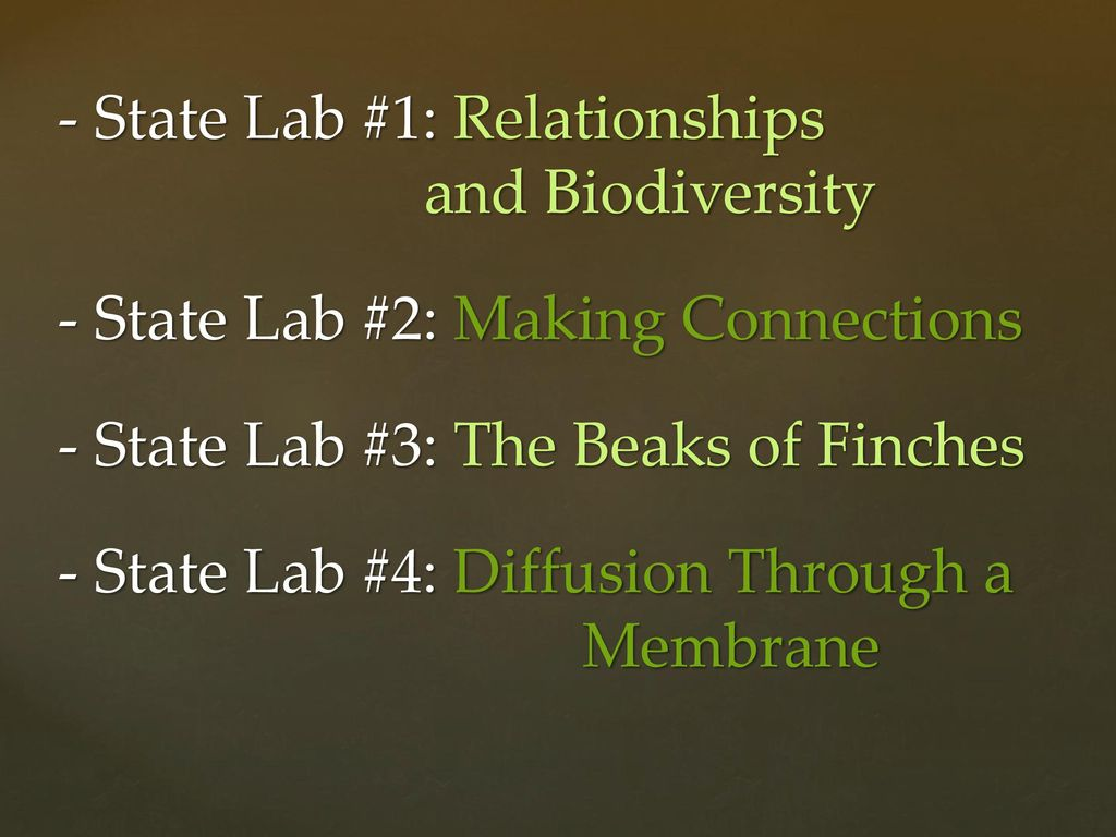 making connections state lab Enzyme test biodiversity and relationships state lab test 5 review of test 5 of  the nys biodiversity and relationships lab  .