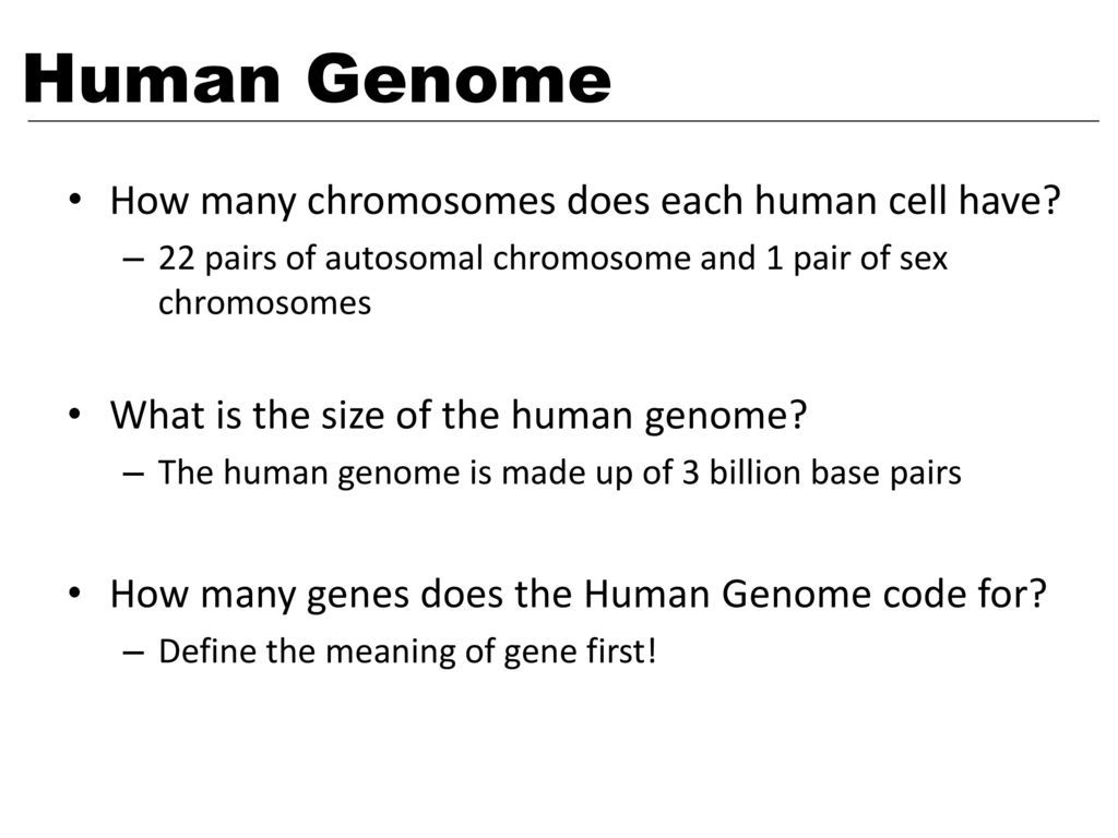how many chromosomes does a sex cell have