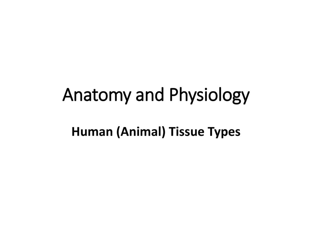 Famous Anatomy Prefixes And Suffixes List Model - Physiology Of ...