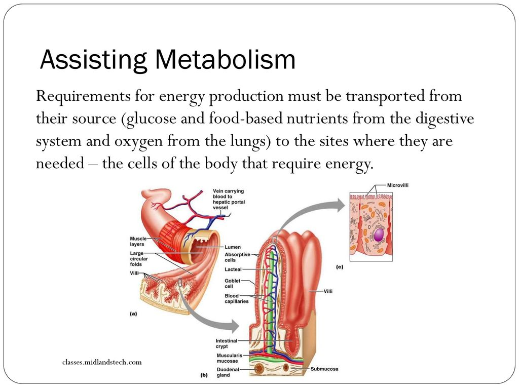 Maintaining a Balance Topic 11: Changes in Blood - ppt download