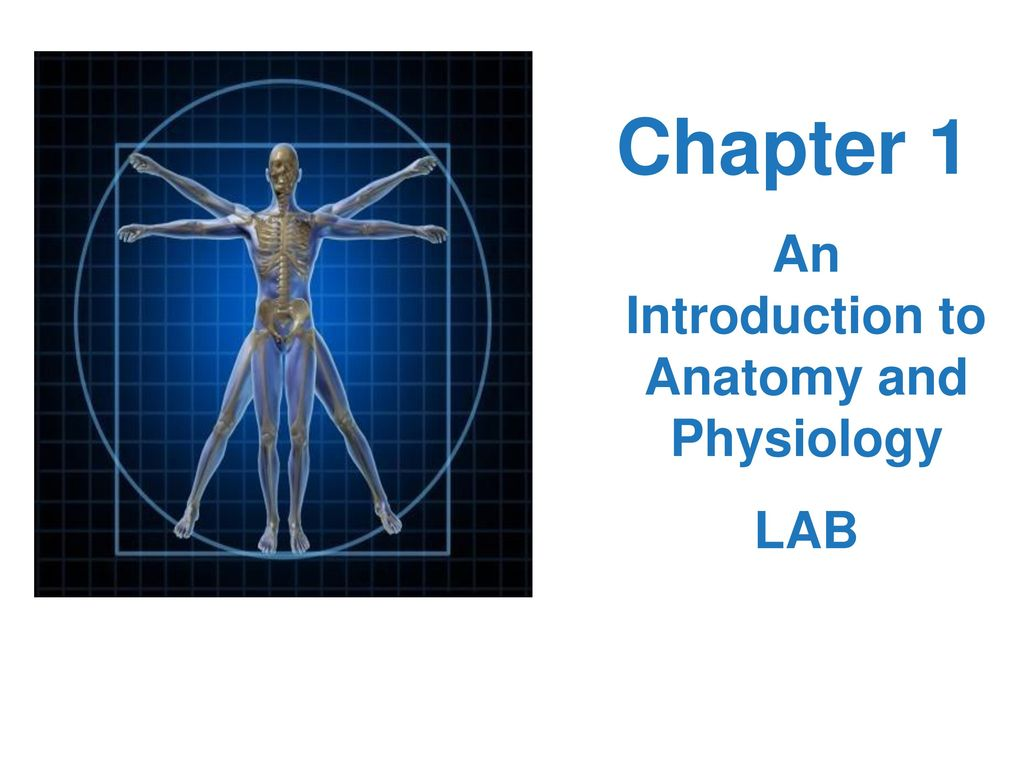 Luxury Anatomy And Physiology Introduction Gallery - Physiology Of ...