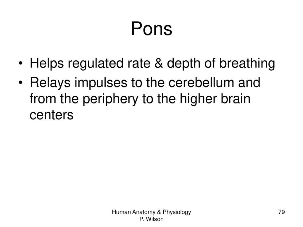 Fantástico Anatomy And Physiology Of Cerebellum Bandera - Imágenes ...