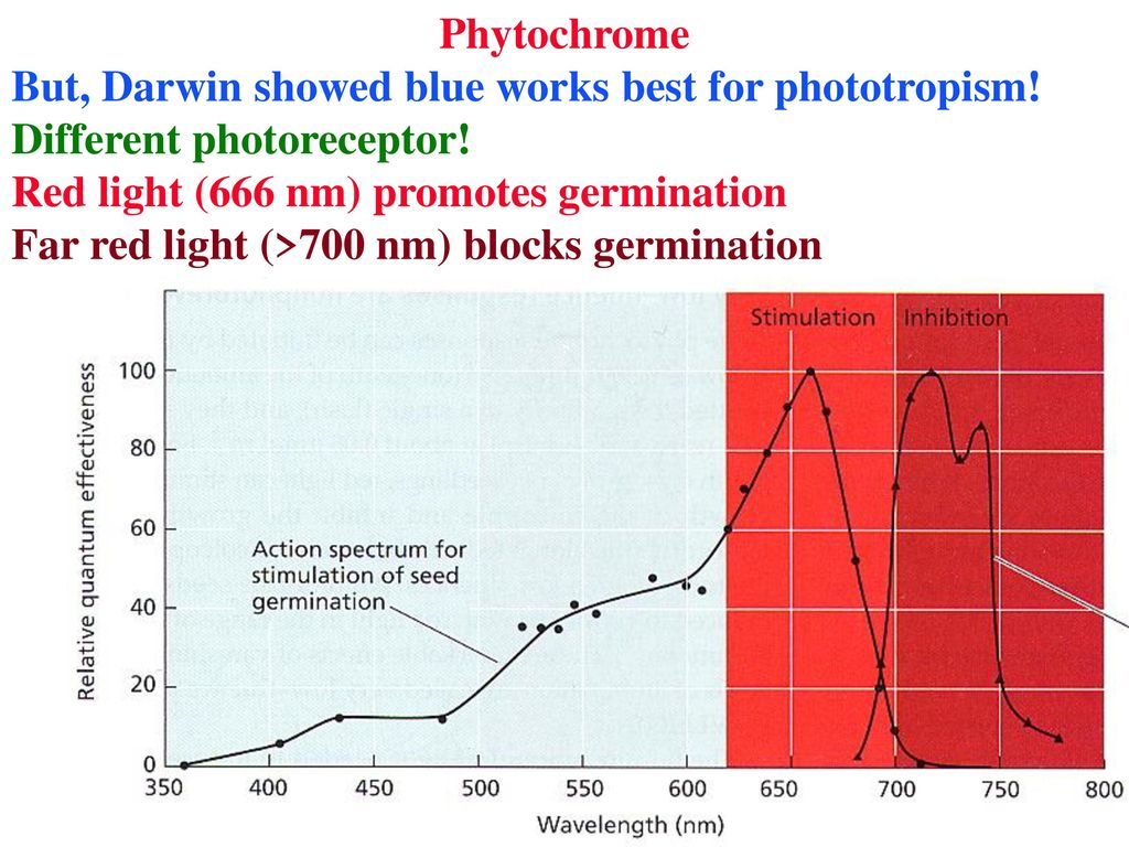 worksheet Phototropism Worksheet friday present a plant stressor what is known about it and why phytochrome but darwin showed blue works best for phototropism different photoreceptor red light