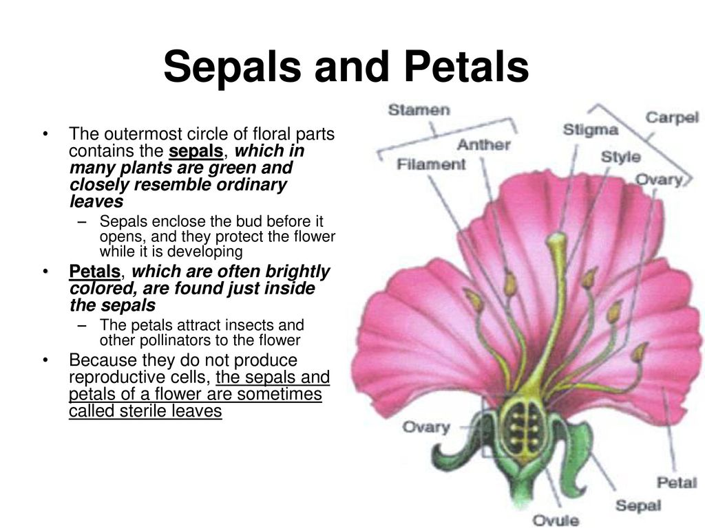 Reproduction Of Seed Plants Ppt Download