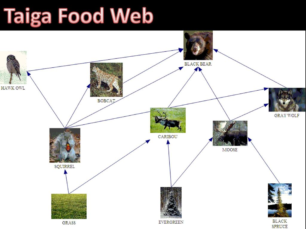 Soil Food Web Canada