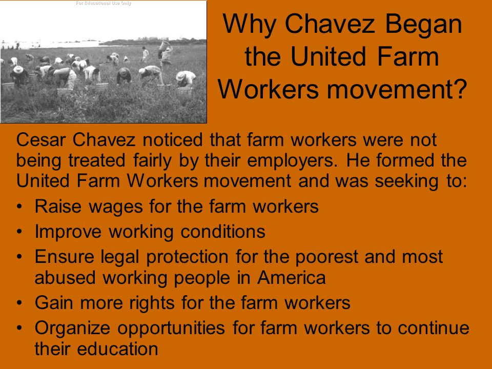 Why Chavez Began the United Farm Workers movement