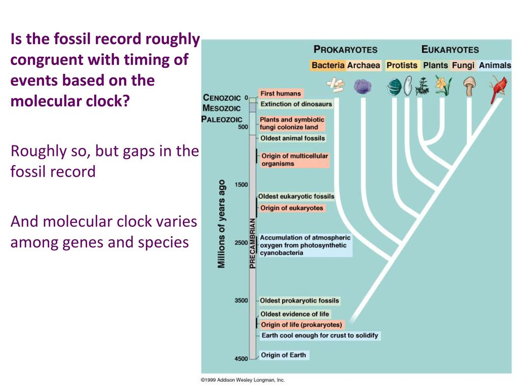 the theories on the origin of life based on fossil record Although darwin based his arguments heavily on fossil record, most scientists now believe that fossil record is actually incompatible with evolutionary theory as no transitional links or intermediate forms have been discovered among this huge collection of fossils in all these years.
