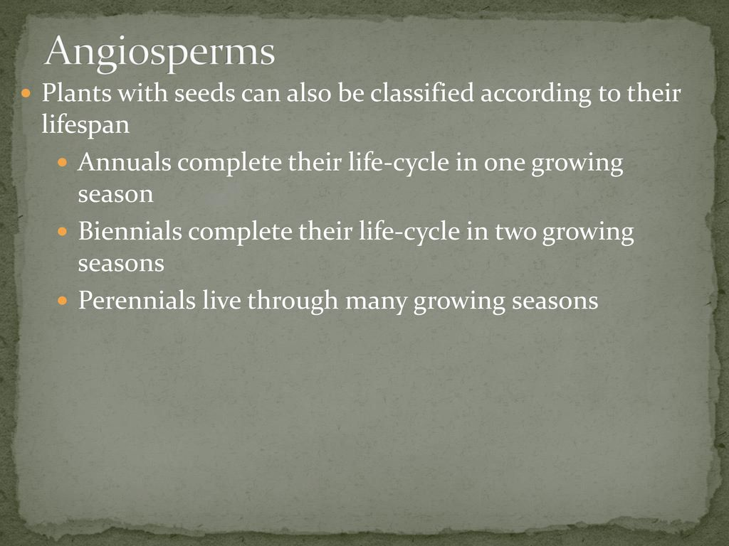 Plants Types And Needs Ppt Download