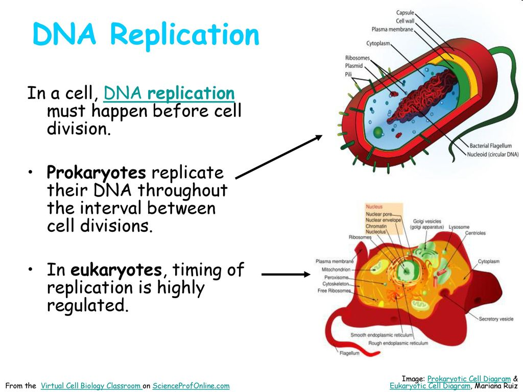 About science prof online ppt download 12 dna replication pooptronica