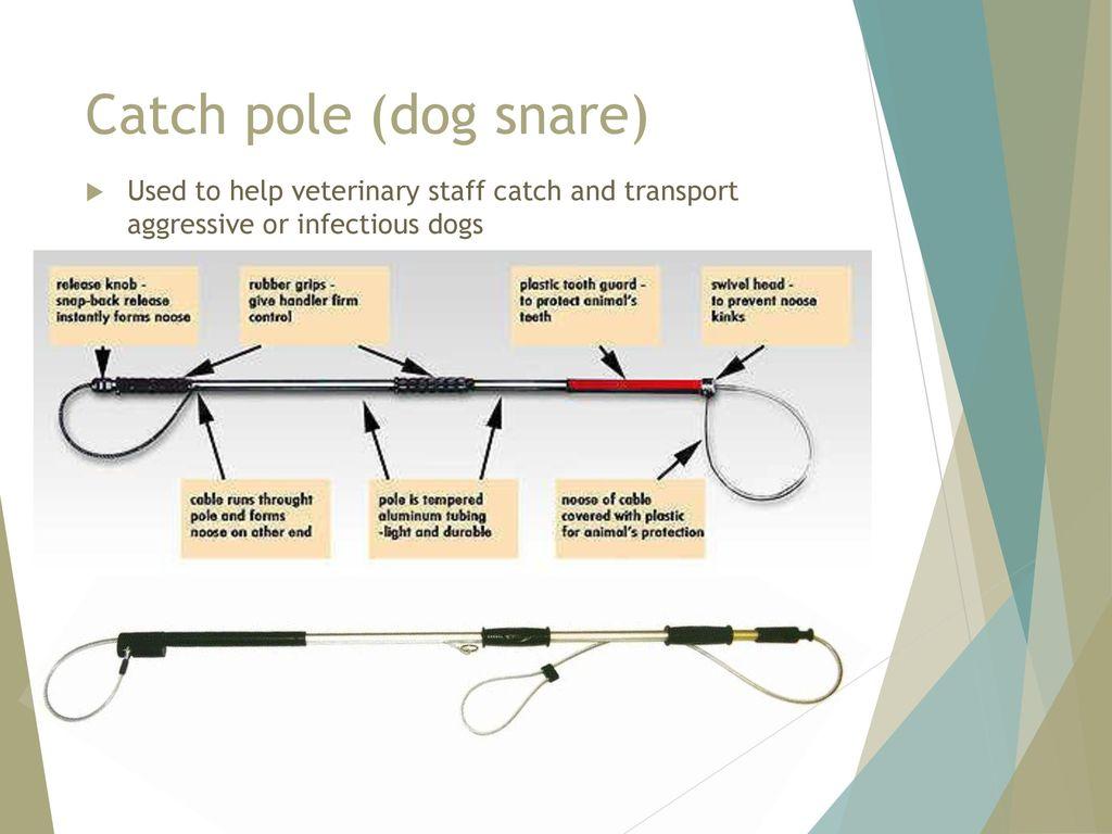 how to make a dog catch pole